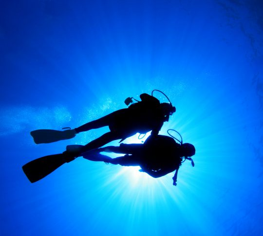 Oasis Marine World Diving Experience